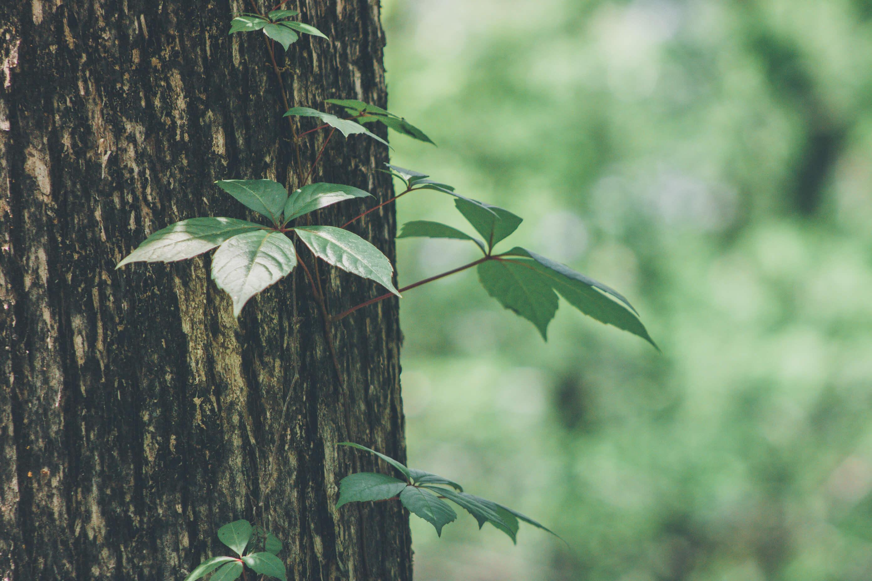 世界の森林資源イメージ