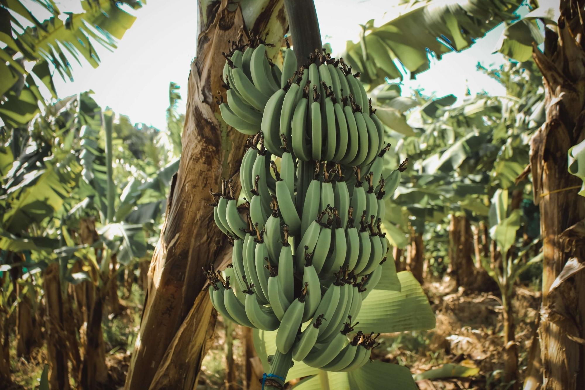 バナナペーパーの採用で、SDGsの17のグローバル目標すべてに貢献する