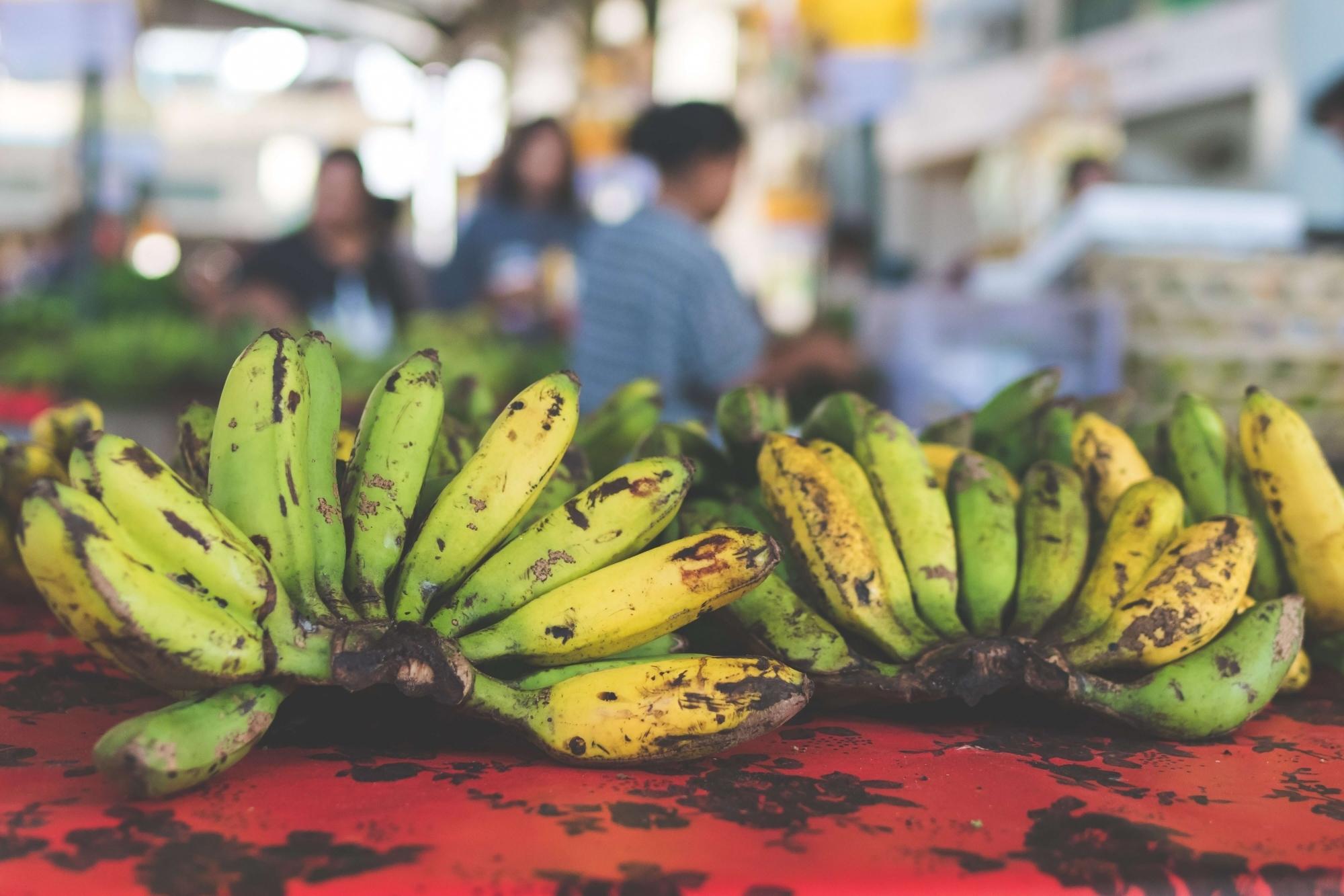 なぜ、バナナで紙を製造するのか?